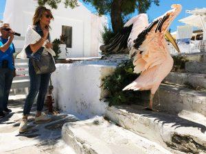 Petros in Mykonos